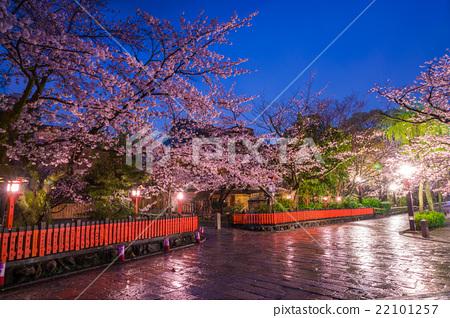图库照片: 东京娱乐区 樱花 樱桃树