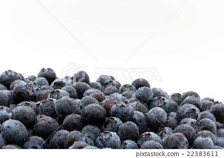 首页 照片 蔬菜_食品 水果 蓝莓 蓝莓 水果 水滴  *pixta限定素材仅在
