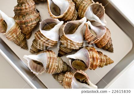 带壳的海鲜大全