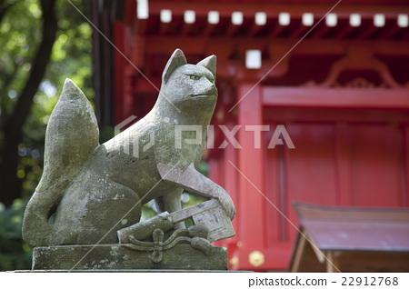 照片 动物_鸟儿 陆生动物 狐狸 狐狸 日本 神奈川  *pixta限定素材仅