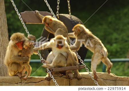 图库照片: 猴子 动物园