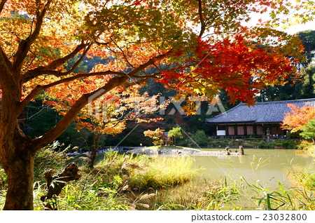 照片 庙宇 寺院 神殿 首页 照片 植物_花 树_树木 枫树 庙宇 寺院