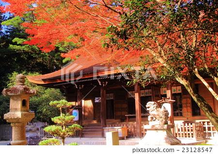 庙宇 寺院 首页 照片 植物_花 树_树木 枫树 国家历史遗址 庙宇 寺院