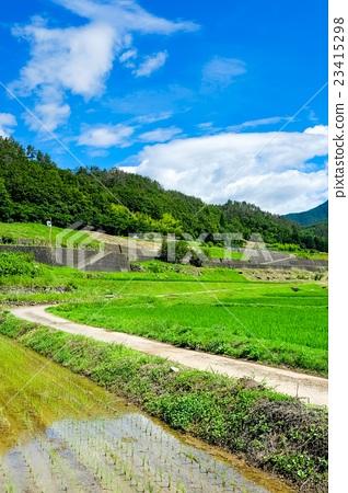 图库照片: 初夏 农村 风景