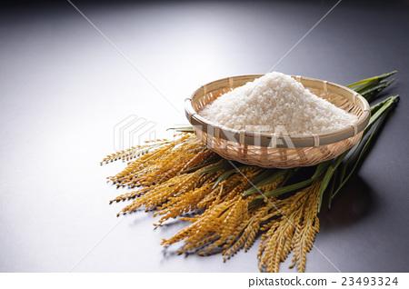 米 首页 照片 料理_食物 米饭类 米饭 稻米 水稻 米  *pixta限定素材