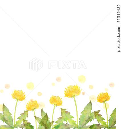 图库插图: 蒲公英 水彩画 花朵