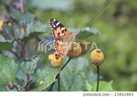 图库照片: 蝴蝶 自然 树叶