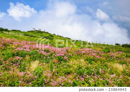 图库照片: 自然 风景 花朵