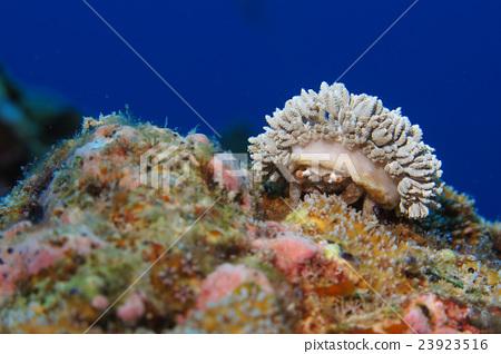 图库照片: 甲壳动物 海洋学家 水下照片