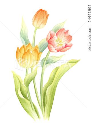 图库插图: 郁金香 水彩画 花朵