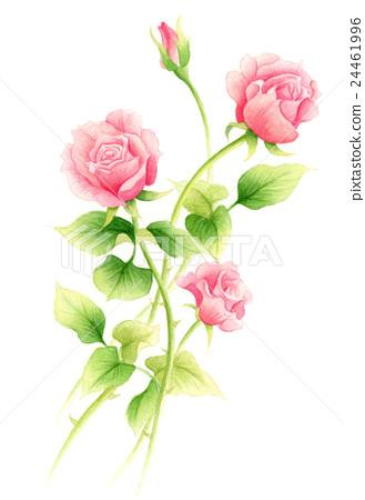 图库插图: 水彩 水彩画 玫瑰花