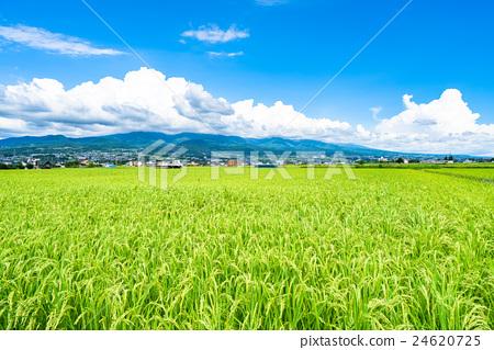 图库照片: 夏季天空 田园 田园风景