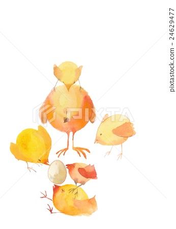 插图 动物_鸟儿 鸟儿 小鸡 水彩画 白色背景 白底  *pixta限定素材仅