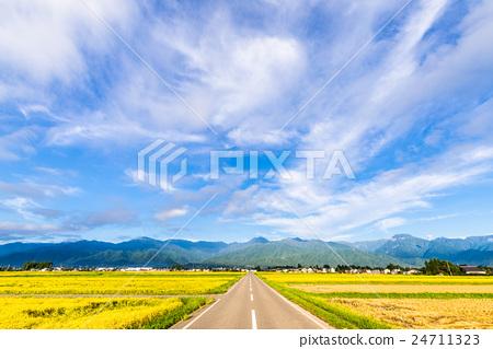 田地_稻田 稻田 照片 安昙野市 乡村风光 农村场景 首页 照片 风景