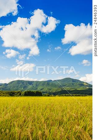 图库照片: 秋天的乡村景观