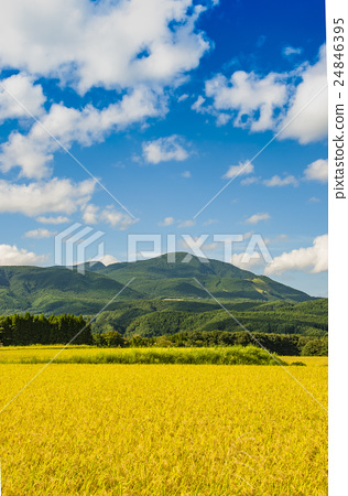 风景_自然 田地_稻田 稻田 照片 秋天的乡村景观 首页 照片 风景_自然