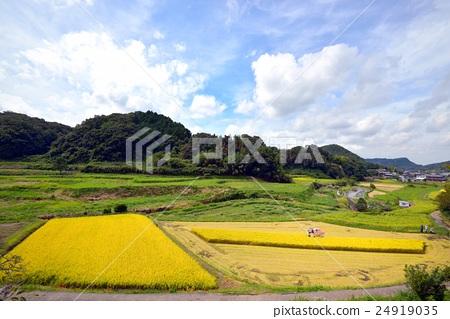 图库照片: 风景 丰收 农村