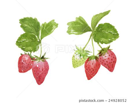 图库插图: 草莓 水彩画 树叶