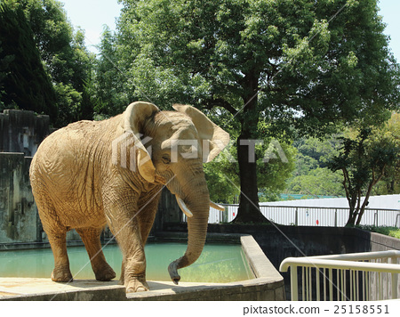 图库照片: 大象 动物园 非洲象