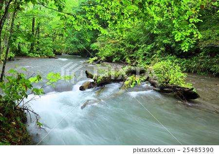 风景_自然 河_池塘 河 照片 奥入濑溪流 山涧 山溪 首页 照片 风景