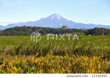 图库照片: 大山 加拿大一枝黄花 风景