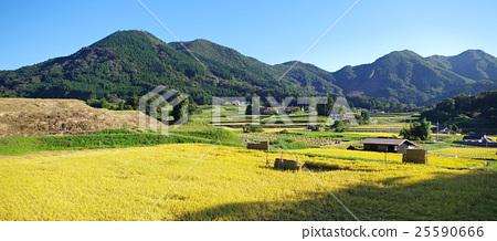 图库照片: 国家风景金黄米领域inaho蓝天横幅