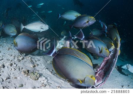 图库照片: 海底的 海里 热带鱼