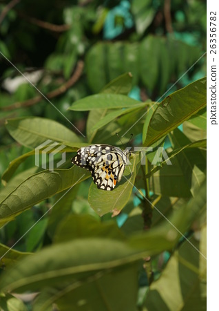 图库照片: 蝴蝶 树叶 花纹