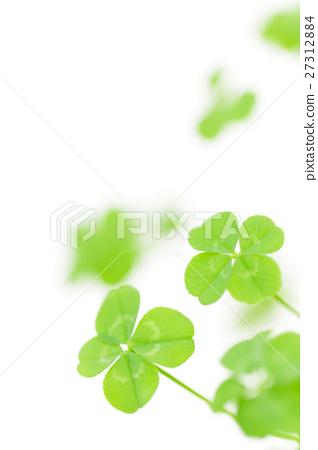 图库照片: 四叶草 四叶 四叶植物图片