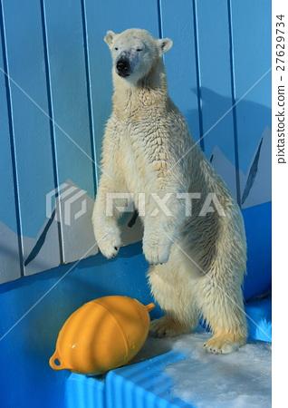 图库照片: 北极熊 牛奶 动物园