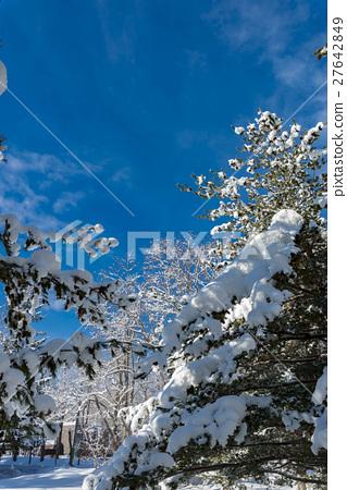 图库照片: 在北海道的冬天风景