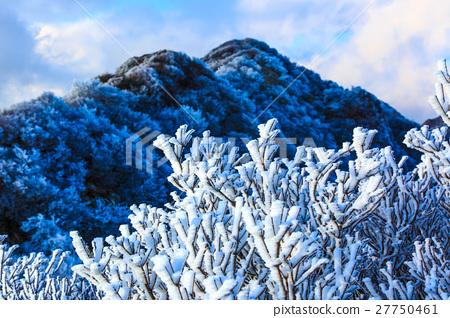 首页 照片 风景_自然 季节 雾凇 风景 云仙 雾凇  *pixta限定素材仅在