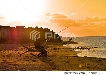 图库照片: 日落 夕阳 四足动物