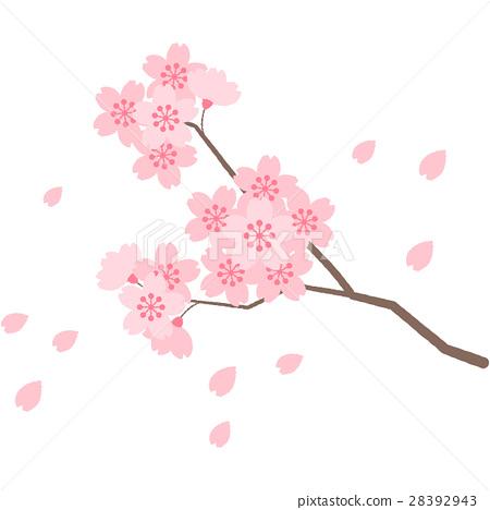 图库插图: 樱花 樱桃树 春天