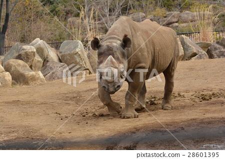 图库照片: 犀牛 动物园 角落