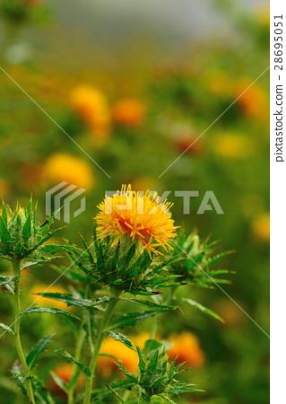 图库照片: 红花 花朵 花卉