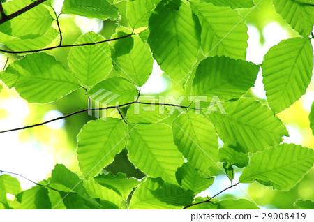 背景 壁纸 绿色 绿叶 树叶 植物 桌面 450_318