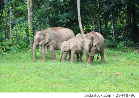 图库照片: 亚洲象 大象 动物