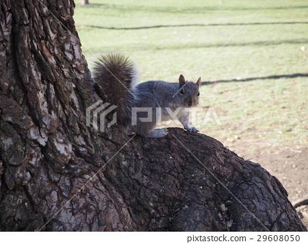 图库照片: 松鼠 动物 树