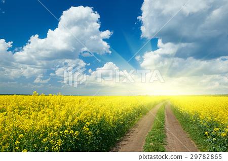 图库照片: road in yellow flower field, beautiful landscape