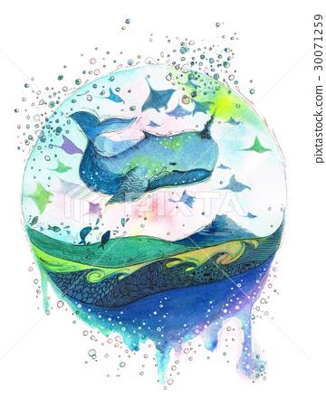 图库插图: 水彩画 鲸鱼 剑鱼