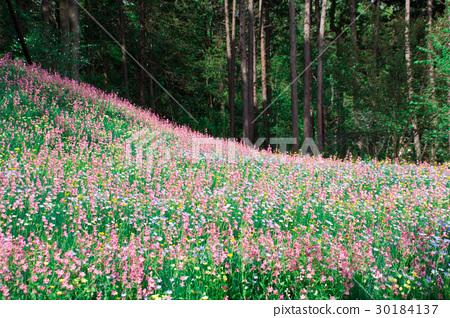 图库照片: 花场山