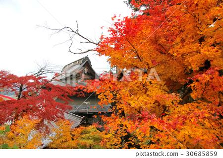 图库照片: 秋天 秋 枫树