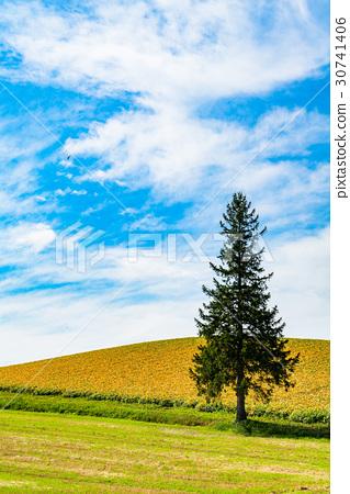 风景_自然 大地 原野 照片 原野 田地 领域 首页 照片 风景_自然 大地