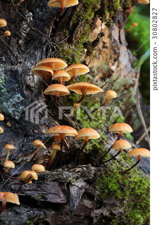 图库照片: 蘑菇 菌类 森林
