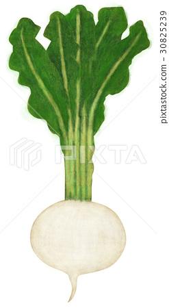 可爱植物白底头像