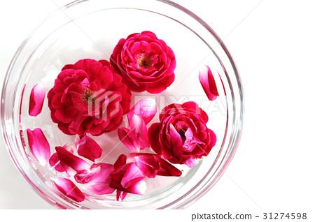 图库照片: 玫瑰 玫瑰花 白底