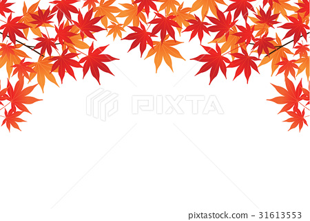 图库插图: 矢量图 红叶 秋叶