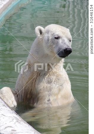 图库照片: 东山动物园 北极熊 动物