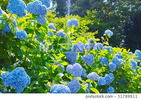 图库照片: 风景 花朵 花卉